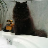 kot przygotowujący ie do kąpieli