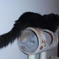 czarny kot na drapaku
