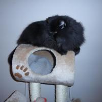 czarny i szary kot na drapaku