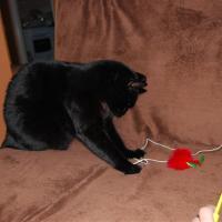 Kot bawi się