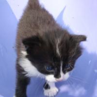 mały kot Miętus