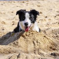 FENIKS w piaskowym okopie