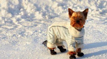 ubranka i buty dla psów
