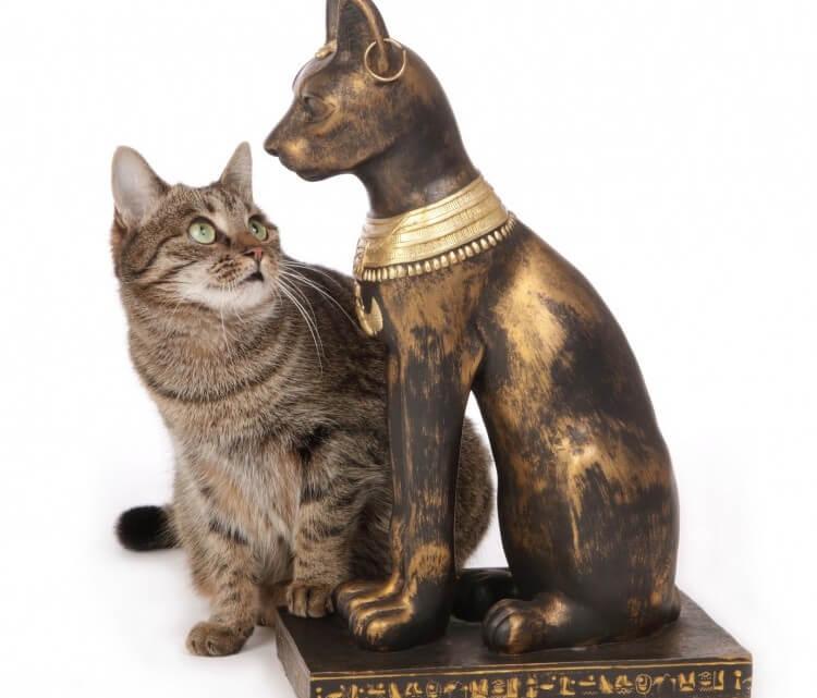 kot w Egipcie