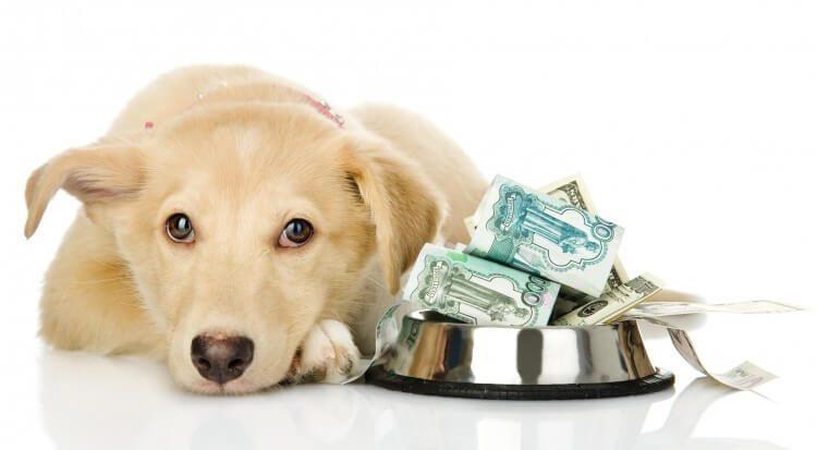 tania karma dla psa