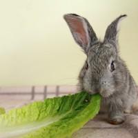 Dlaczego królik powinien regularnie ścierać zęby