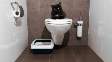 kocia toaleta