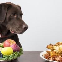 Psia alergia pokarmowa