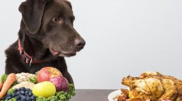 alergia dla psa