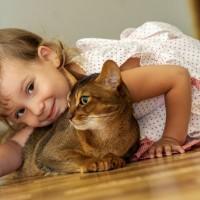 Kot rasowy…bez rodowodu