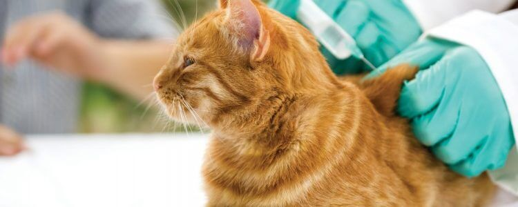 Kastracja isterylizacja zwierząt