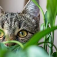 Magia kocich oczu