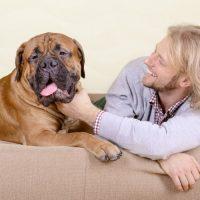 Czymożemy zarazić psa grypą ?