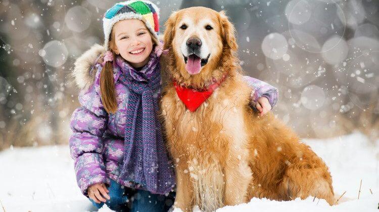 jak zadbać o psie łapy zimą
